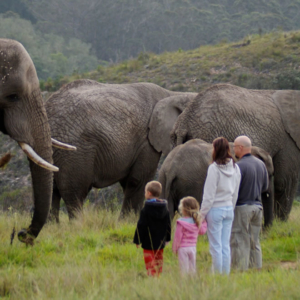 knysna-elephant-park-Harry-and-family_daily-tour