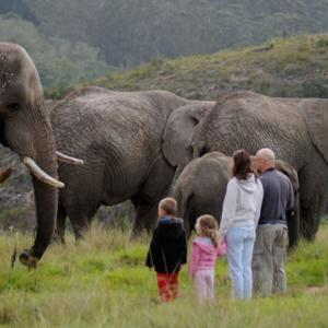 knysna-elephant-park-Harry-and-family_daily-tour